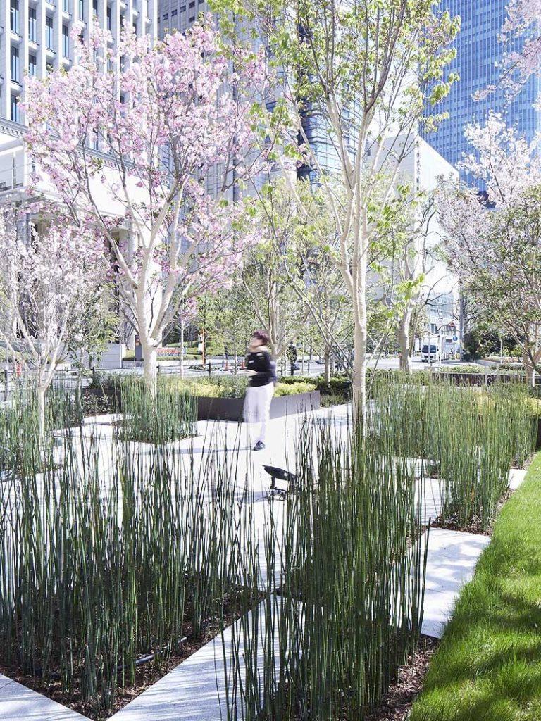 Японский ландшафтный сад